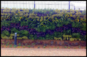 Vertical Garden or LifeGrow Case Study
