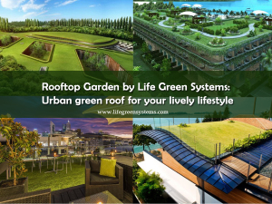 Rooftop_Garden_By_Life_Green_Systems